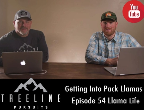 Getting Into Pack Llamas – Episode 54- Llama Life