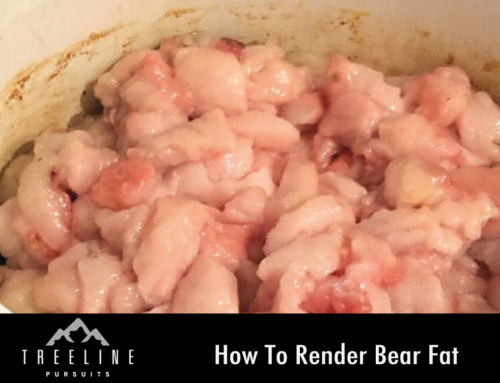 How To Render Bear Fat