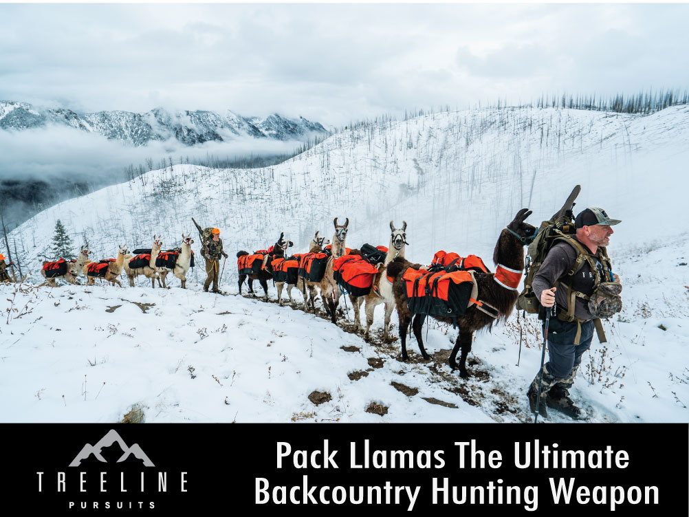 llamas_backcountry_weapons